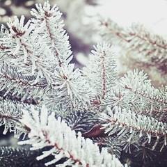 Снежа Александрова